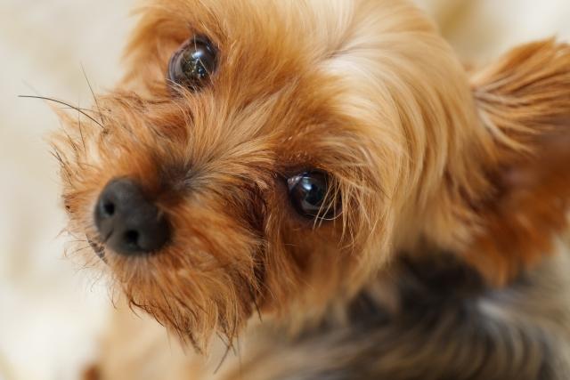 犬が人を幸せにしてくれる理由とは?